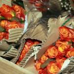 Розы5